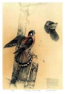 The Getaway - American Kestrel by Michael Dumas