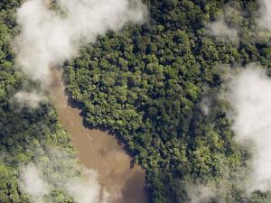 This Large River is Located in the Middle of the Ituri Forest, Democratic Republic of Congo by Michael Fay