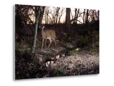A Camera Trap Catches a White-Tailed Deer in the Forest by Michael Forsberg
