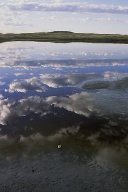 A Depredated American Avocet Egg on a Sandhills Lakeshore by Michael Forsberg
