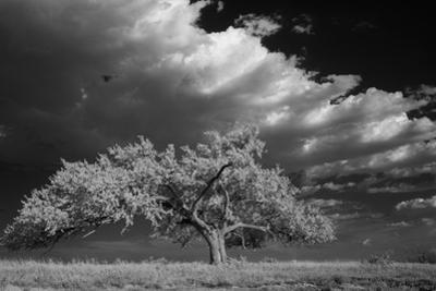 A Lone Siberian Elm Tree Sits on a Rocky Hilltop by Michael Forsberg