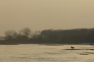 A Pair of Silhouetted White-Tailed Deer on the Banks of the Platte River at Twilight by Michael Forsberg