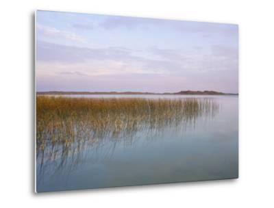 Grass Grows from the Waters of Big Alkali Lake by Michael Forsberg