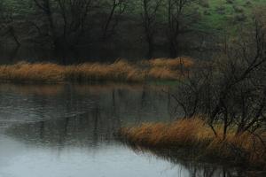 Landscape of Rain Falling on Clear Creek by Michael Forsberg