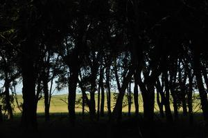 Silhouette of Trees and Sandhills in Background by Michael Forsberg