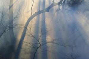 Smoke from Prairie Burn Through Woodland Hollow by Michael Forsberg