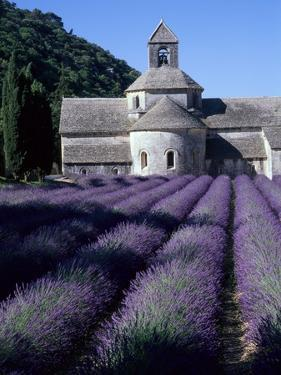 Abbey and Lavender Fields by Michael Freeman
