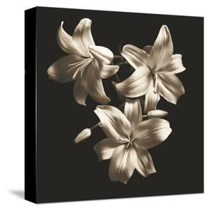 Three Lilies by Michael Harrison