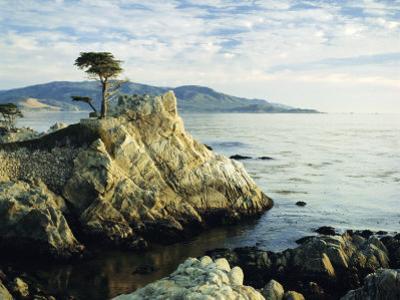 The Lone Cypress Tree on the Coast, Carmel, California, USA by Michael Howell