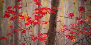 Autumn Leaves Near The Great Meadow by Michael Hudson