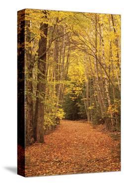 Autumn Path by Michael Hudson