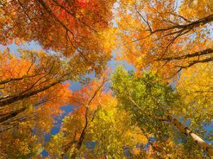Autumn Spendour by Michael Hudson