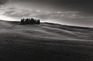 Cypresses and Rolling Hills by Michael Hudson