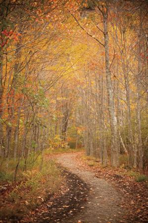 Winding Autumn Path by Michael Hudson