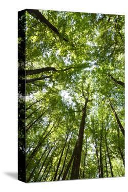 Woods, Shenandoah National Park by Michael Hudson