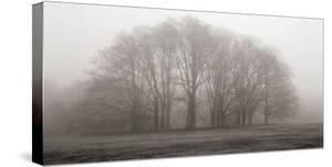 Gathering Trees by Michael Iacobellis