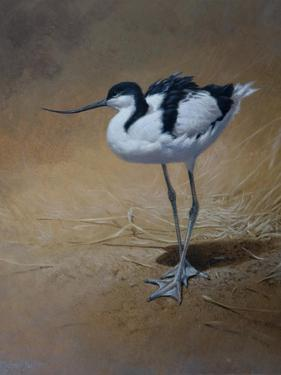 Avocet by Michael Jackson