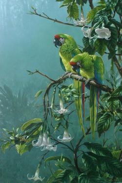 Buffons Macaws by Michael Jackson