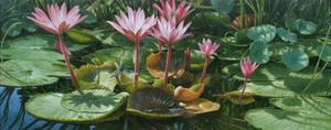 Lily Pond by Michael Jackson