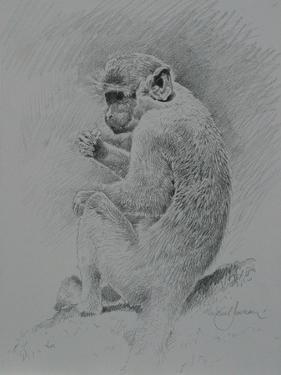 Monkey Sketch by Michael Jackson