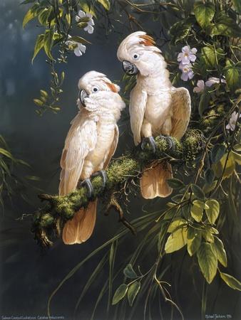 Salmon Crested Cockatoos