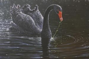 Swan by Michael Jackson