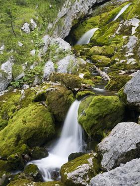 Soca, close source of Soca, Triglav national park, Julian Alps, Slovenia by Michael Jaeschke