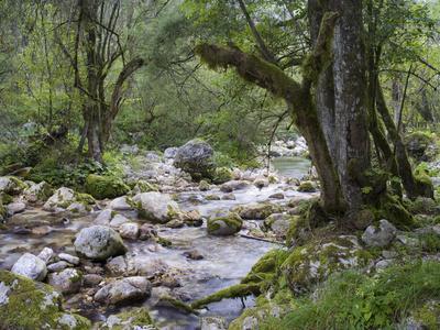 Sunik water grove, Lepenatal, Triglav national park, Julian Alps, Slovenia