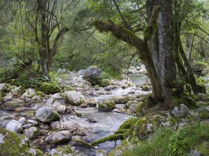 Sunik water grove, Lepenatal, Triglav national park, Julian Alps, Slovenia by Michael Jaeschke