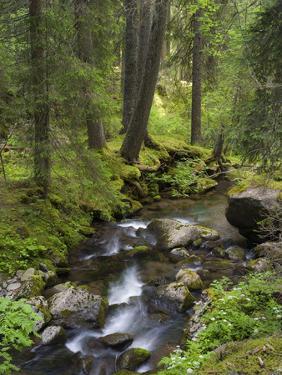 Val Travignolo, Parco Naturale Paneveggio – Pale di San Martino,Dolomites, Italy by Michael Jaeschke