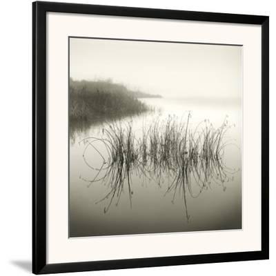 Reeds by Michael Kahn