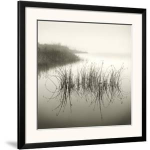 Reeds by Michael Kahn
