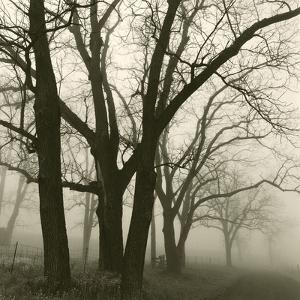 Tree Study III by Michael Kahn