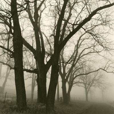 Tree Study III