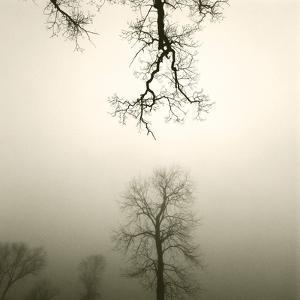 Tree Study IV by Michael Kahn