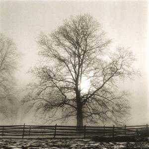 Winter Mist by Michael Kahn