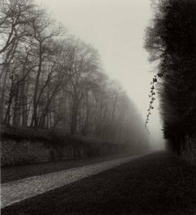 Suspended Vine by Michael Kenna