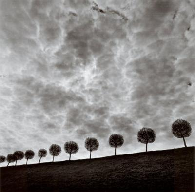 Ten and a Half Trees, Peterhof, Russia, 2000 by Michael Kenna