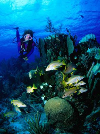 A Diver Watches a Group of Schoolmasters Congregate Around One of the Cayman Reefs, Cayman Islands by Michael Lawrence