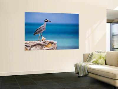Adult Yellow-Crowned Night-Heron at Barracuda's, Cape Eleuthera by Michael Lawrence