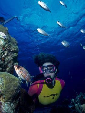 Diver Looking at Squirrelfish (Holocentrus Adscensionis) on Voral Head by Michael Lawrence