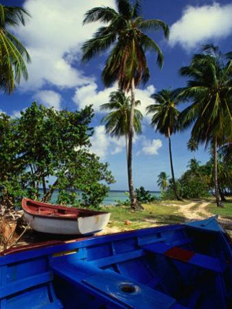 Wooden Fishing Boats Among Palm Trees, Pigeon Point, Trinidad & Tobago by Michael Lawrence