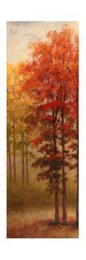 Fall Trees II by Michael Marcon