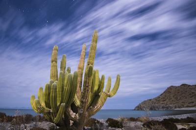 A Cactus Stands Along the Edge of the Ocean
