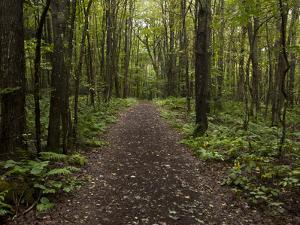 A Trail Through the Forest at the Adirondack Interpretive Center by Michael Melford