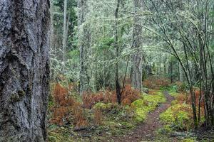 A Trail Through the Woods in the San Juan Islands by Michael Melford