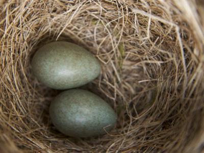 Bird's Nest in Hellemoboten by Michael Melford