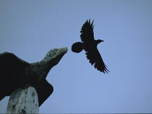 Carved Raven Tops a Totem Pole, with Live Raven Flying Above by Michael Melford