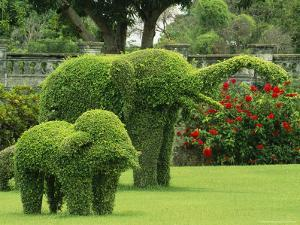 Elephant Topiaries in a Formal Garden by Michael Melford