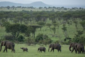 Elephants in a Plain Surrounded by Mountains in Serengeti National Park by Michael Melford